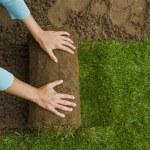 Gardener applying turf rolls — Stock Photo #68911507