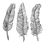Feathers set hand drawn vector llustration — Vector de stock