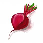 Beet vector illustration  hand drawn  painted watercolor — Stock Vector