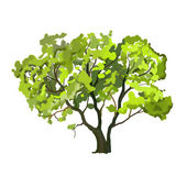 Tree vector illustration  hand drawn  painted watercolor — Stock Vector