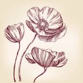 Poppies hand drawn vector llustration realistic sketch — Stock Vector