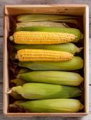 Corn cobs — Stock Photo