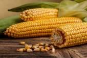 Fresh corn vegetable — Stock Photo