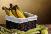 Corn cobs — Stock Photo