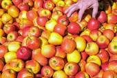 Many red apples for sale — Stock Photo