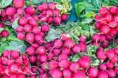 Radish for sale at a market — Stock Photo