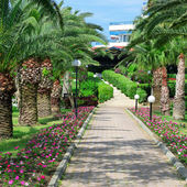 Beautiful palm alley in the park — Stock Photo