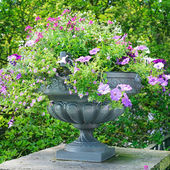 Beautiful flower bed in vase — Stock Photo