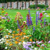 Blossoming flowerbeds in the park — Stock Photo