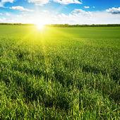 Beautiful sunset on green field     — Stock Photo