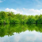 Mangroves and blue sky — Stock Photo