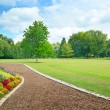Multicolored flowerbed on a glade — Stock Photo #58909179