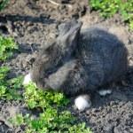 Little rabbit eats the grass — Stock Photo #63699045