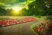 Sunset in a beautiful park — Stock Photo