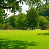 Beautiful meadow in the park — Stock Photo