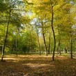 Fallen leaves in autumn forest — Stockfoto #65309177