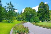 Beautiful flowers and trees in the park — Stock Photo