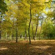 Fallen leaves in autumn forest — Stockfoto #66418907