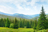 Beautiful pine trees on background high mountains. — Stock Photo