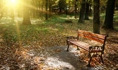 Dawn in the autumn park — Stock Photo