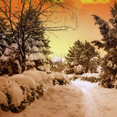 Beautiful sunset in snowy woods — Stock Photo