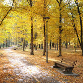Autumn park and fallen leaves — Stock Photo