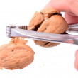 Nut Cracker — Stock Photo #64914595