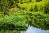 Stream river around green trees and cane — Stock Photo