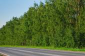 Narrow country road near a forest in evening time — Stock Photo