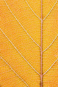 Orange leaf macro — Stock Photo