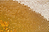 Honeycomb with fresh honey and pollen — Stock Photo
