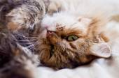Fluffy cat — Stock Photo