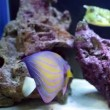 Fish Tank With Angelfish And Longhorn Cowfish — Stock Video #52922955