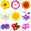 Colorful Flowers Cutouts — Stock Photo #55322657