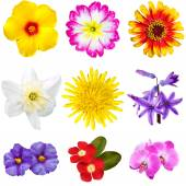 Colorful Flowers Cutouts — Stock Photo