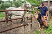 Horse Dog And Man — Stock Photo