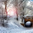 Morning In Snowy Forest — Stock Photo #64475613