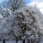 Frozen Trees — Stock Photo #64637595