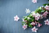 Weigel beautiful pink flowers — Foto de Stock