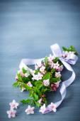 Weigel beautiful pink flowers — Stockfoto