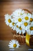 красивый букет белых ромашек — Стоковое фото