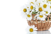 Beautiful bouquet of white daisies — Stock Photo