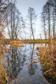Reflection of trees in water  — Stock Photo