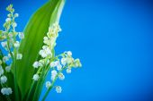 Beautiful forest lilies  — Stock Photo