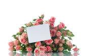 Pink roses — Zdjęcie stockowe