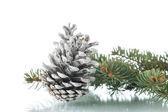 Noel köknar-koni çam dalları ile — Stok fotoğraf