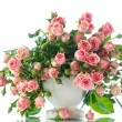 Pink roses — Stock Photo #61054883