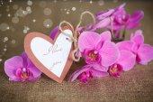 Beautiful purple phalaenopsis flowers — Stock Photo