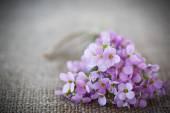 Bouquet of spring flowers — ストック写真