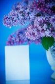 Beautiful spring lilac  — Stock Photo